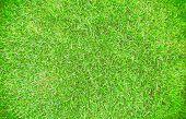 Green Grass Texture Background. Green Grass Natural, Background Texture. Green Grass Texture Backgro poster