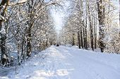 Nature, Landscape, Travel Concept - Beautiful Winter Landscape With Snowy Road In The Winter Forest. poster