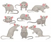 Flat Vector Set Of Mouse In Different Poses. Small Rodent With Gray Coat, Big Pink Ears And Long Tai poster