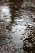 Rain Drops And Rain Puddles On Wet Surface poster
