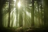 An Old Misty Wood Pine Forest On A Late Autumn Afternoon With Warm Sunrays Illuminating The Area. poster