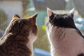 The Rear View Of Two Adult Young Cats Black And White And Tabby Are Sitting Together On A Windowsill poster
