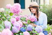 Gardening In Bushes Of Hydrangea. Girl With Smile Is Working In Sunny Country Garden. Flowers Are Pi poster