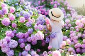 Little Girl Is In Bushes Of Hydrangea Flowers In Sunset Garden. Flowers Are Pink, Blue, Lilac, Laven poster