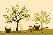 foto of hand-barrow  - vector hand barrow with basket of apples in apple orchard - JPG