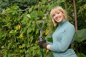picture of green-beans  - cute blond gardener stands with hoe in her vegetable patch - JPG