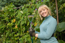 picture of green bean  - cute blond gardener stands with hoe in her vegetable patch - JPG