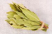 picture of bay leaf  - close up of the bunch of bay leaves - JPG