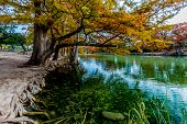 pic of crystal clear  - Emerald Green Crystal Clear Waters of the Frio River Surrounded by Beautiful Fall Foliage on the Giant Bald Cypress Trees at Garner State Park - JPG