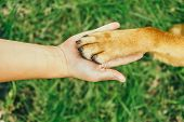 stock photo of paw  - Dog paw and human hand are doing handshake on nature - JPG