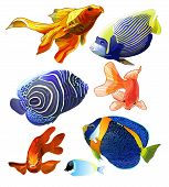 pic of butterfly fish  - Set of exotic colorful fish - JPG