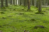 pic of floor covering  - A forest with trees stubs and a moss - JPG