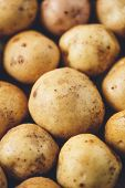 image of solanum tuberosum  - Fresh potato tubers closeup - JPG