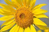 stock photo of fibonacci  - close - JPG