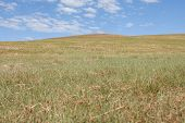 stock photo of semi-arid  - Blue sky over the steppes of Mongolia - JPG
