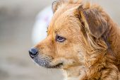 pic of personality  - Dogs are more than just pets they are familly - JPG