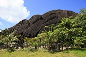 image of enormous  - Beautiful enormous black granite rocks in the thickets of tropical vegetation - JPG