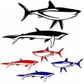stock photo of great white shark  - Set shark - JPG