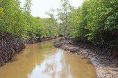 image of wilder  - file of natural coastal mangrove forest environment wilderness - JPG