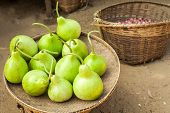 picture of calabash  - Bottle green gourds  - JPG