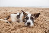 picture of sorrow  - sorrow face of homeless dog lying on sand beach with lonely feeling - JPG