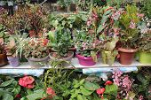 pic of greenhouse  - The greenhouse is heated greenhouse - JPG