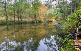 picture of marshlands  - Beautiful landscape with wild river in autumnal forest - JPG
