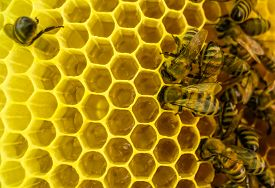 stock photo of honeycomb  - Bees at work - JPG