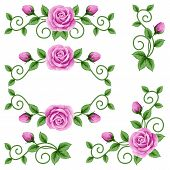 foto of climbing roses  - Beautiful isolated roses on the white background - JPG