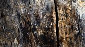 pic of decomposition  - The beauty of the texture  wood surface - JPG