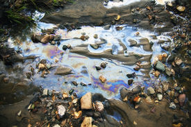 picture of water pollution  - water with different colored patches of gasoline and oil - JPG