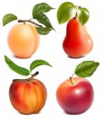 Photo-realistic vector fruits.