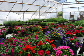 pic of flower pot  - lots of flowers at a loccal nursery - JPG