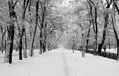 stock photo of winter trees  - snowstorm in city park - JPG