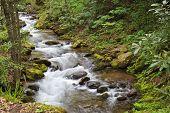 Pretty Mountain Creek In North Carolina In The Springtime poster