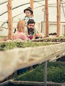 Harvest. Harvest In Harvesting Season. Family Keep Rich Harvest In Greenhouse. Harvest Grown In Mode poster