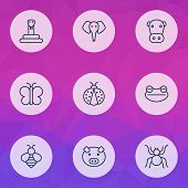 Zoology Icons Set With Butterfly, Snake, Elephant And Other Bumblebee Elements. Isolated  Illustrati poster