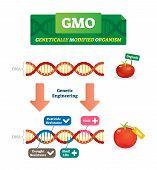 Gmo Vector Illustration. Organic And Modified Agricultural Plants Scheme. Compared Healthy Natural T poster