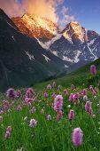Постер, плакат: Цветы на ветру горы Кавказа