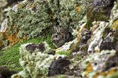 picture of rabbit hole  - Wild rabbit sheltering behind rocks keeping a watchful eye on the camera - JPG