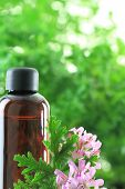 picture of geranium  - Bottle of Geranium essential oil - JPG