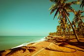 stock photo of jungle exotic  - Beautiful sunny day at tropical beach with palm trees - JPG