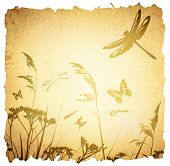 picture of dragonflies  - Vintage Summer Meadow Background With Dragonfly and Grass - JPG