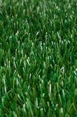 Turf | Artificial Grass