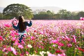 Little asian girl standing in cosmos flower fields