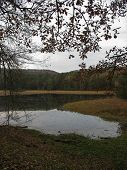 picture of speculum  - Lake during winter in Alsace in France - JPG