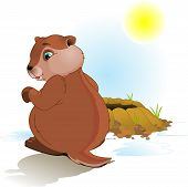 pic of groundhog  - Illustration for Groundhog Day - JPG