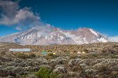 stock photo of kilimanjaro  - Looking up to Kilimanjaro from Shira campsite