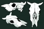 pic of cow skeleton  - three skull cow on the gray background - JPG