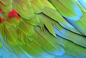 stock photo of green-winged macaw  - Beutiful of green - JPG